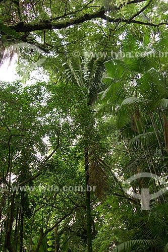 Assunto: Palmeira Patauá ou Batauá (Oenocarpus bataua) - Local: Museu Emílio Goeldi - Belém - Pará - Brasil / Data: Fevereiro de 2009