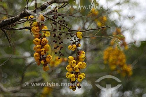 Assunto: Flor na beira do Rio Uraricoera / Local: Roraima - Brasil / Data: Janeiro de 2006