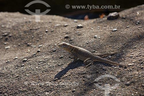 Assunto: Calango (Tropidurus torquatus) termoregulando em pedra do Vale da Lua - Parque Nacional da Chapada dos Veadeiros / Local: Goiás (GO) - Brasil / Data: Julho de 2007