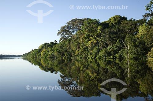Assunto: Mata de Igapó na época da cheia - Estação Ecológica Anavilhanas - Rio Negro / Local: Amazonas (AM) - Brasil / Data: Julho de 2007