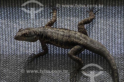 Assunto: Lagarto no Parque Botânico /Local: Vitória - ES /Data: Março de 2008
