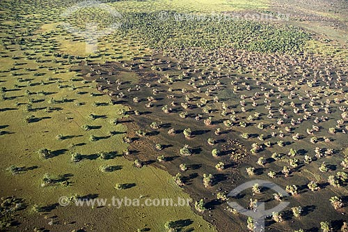 Assunto: Vista aérea de queimada na região do Cerrado / Local: perto de São Félix do Araguaia - Mato Grosso (MT) - Brasil / Data: Junho de 2006