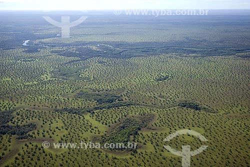 Assunto: Cerrado do PARNA (Parque Nacional) Araguaia, na ilha do Bananal / Local: Tocantins (TO) - Brasil / Data: Junho de 2006