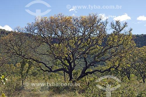 Assunto: Árvore do Cerrado no Parque Estadual do Jalapão / Local: Tocantins (TO) - Brasil / Data: Junho de 2006