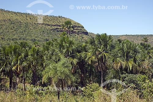 Assunto: Buritizal na Serra do Lajeado, perto de Palmas / Local: Tocantins (TO) - Brasil / Data: Junho de 2006