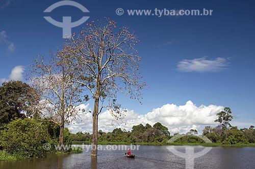 Assunto: Pescador ribeirinho e mungubeira (Pseudobombax munguba) cheia de frutos na floresta amazônica de várzea perto de Terra Santa / Local: Pará (PA) - Brasil / Data: Junho de 2006