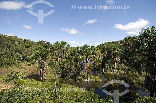Assunto: Buritizal (Mauritia flexuosa) ao longo de igarapé na Br-174 (Manaus - Boa Vista) / Local: Amazonas (AM) - Brasil / Data: Junho de 2006