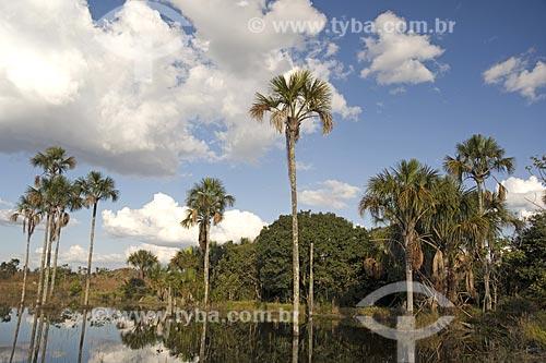 Assunto: Buritis (Mauritia flexuosa) em lagoa da bacia do rio Paraná, na Estação Ecológica de Águas Emendadas / Local: Planaltina - Distrito Federal (DF) - Brasil / Data: Junho de 2006