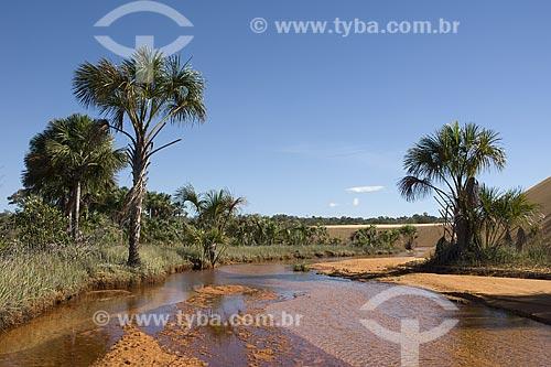 Assunto: Buritis (Mauritia flexuosa) nas dunas do Parque Estadual do Jalapão / Local: Tocantins (TO) - Brasil / Data: Junho de 2006