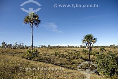 Assunto: Início de uma vereda de buritis (Mauritia flexuosa) no Parque Estadual do Jalapão / Local: Tocantins (TO) - Brasil / Data: Junho de 2006