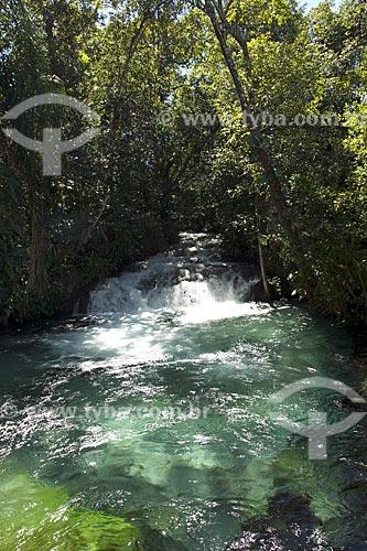 Assunto: Interior da mata de galeria e as águas cristalinas de um rio do Cerrado, no Parque Estadual do Jalapão / Local: Tocantins (TO) - Brasil / Data: Junho de 2006