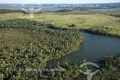 Assunto: Palmeiras uricuri (Attalea sp) na beira da represa do Lajeado / Local: Tocantin (TO) - Brasil / Data: 05/2007