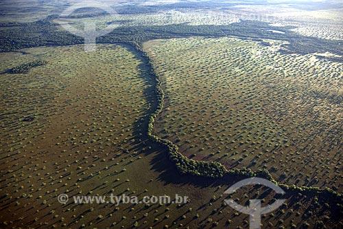 Assunto: Vista aérea de vereda de buritis (Mauritia flexuosa) na região do Cerrado / Local: Mato Grosso (MT) - Brasil / Data: Junho de 2006