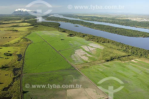 Assunto: Arrozal em área de agricultura irrigada atrás da mata de galeria do rio Branco, perto de Boa Vista / Local: Roraima (RR) - Brasil / Data: Janeiro de 2006