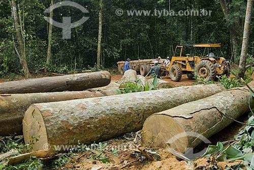 Asunto: Carregamento de madeira na Reserva Chico Mendes - Seringal Cachoeira / Local: Xapuri - Acre - Brasil / Data: 06/2008