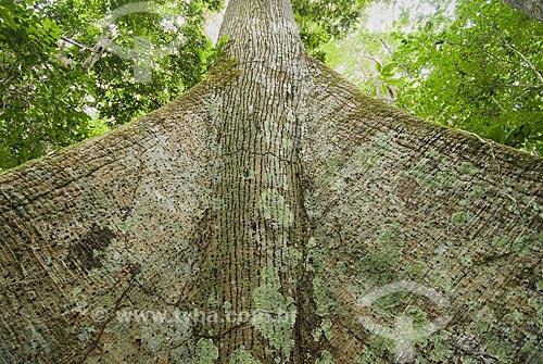 Asunto: Árvore Sumaúma (Ceiba pentranda) na Reserva Chico Mendes / Local: Xapuri - Acre - Brasil / Data: 07/2008