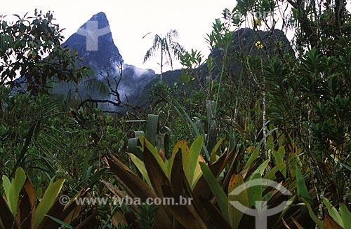 Assunto: Vegetação típica acima dos 2000 metros de altitude com o Pico da Neblina ao fundo, ponto mais alto do Brasil / Local: Parque Nacional do Pico da Neblina - São Gabriel da Cachoeira – Amazonas (AM) / Data: Março de 2009