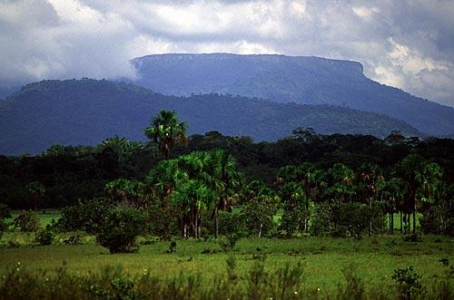 Assunto: Serra do Tepequém / Local: Amaraji - Roraima (RR) - Brasil / Data: Março de 2009