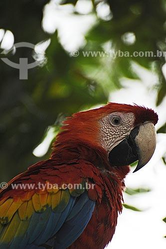 Assunto: Arara no Parque Ambiental Municipal / Local: Paragominas - Pará - Brasil / Data: 31-03-2009