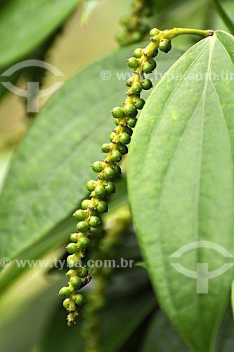 Assunto: Detalhe de pimenta do reino (Piper nigrum L.) no pe (arvore)/ Local: Tomé-Açu - Pará - Brasil / Data: 01-04-2009