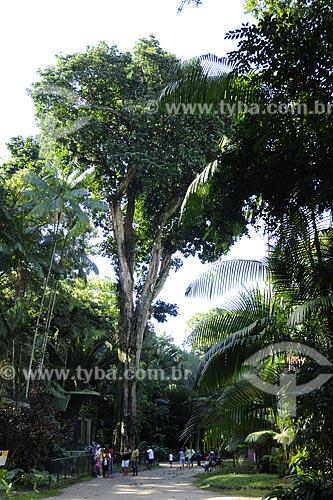 Assunto: Árvore Guajará (Chrysophyllum excelsum huber), Fam. Sapotacea / Local: Museu Paraense e Parque Botânico Emílio Goeldi - Belém - Pará - Brasil / Data: 05-05-2009