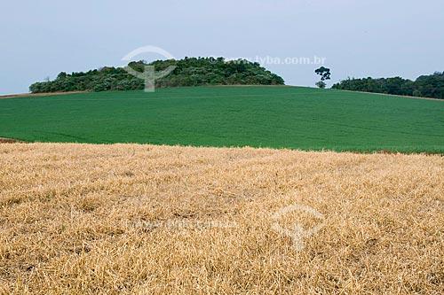 Assunto: Dissecação de aveia para plantio direto com trigo ao fundo / Local: Xanxarê - Santa Catarina (SC) / Data:09/2008