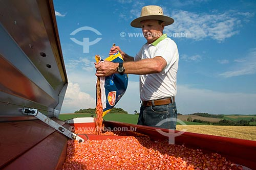 Assunto: Airton Luis Albertoni, pequeno produtor da cidade de Xanxerê desensacando grãos de milho / Local: Xanxerê - Santa Catarina (SC) - Brasil / Data: Setembro de 2008