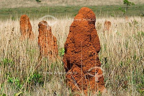 Assunto: Cupinzeiros em campo limpo no Parque Nacional das Emas / Local: Parque Nacional das Emas - Mineiros - Goiás (GO) / Data: Outubro de 2008