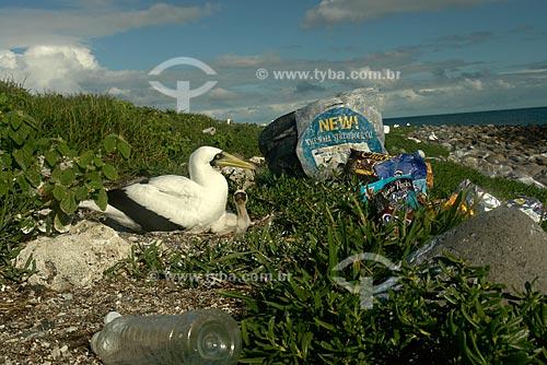 Assunto: Atobá (Sula dactylatra) e filhote cercados de lixo na ilha Siriba, no arquipélago de Abrolhos / Local: Parque Nacional Marinho dos Abrolhos - Bahia (BA) - Brasil / Data: Julho de 2008