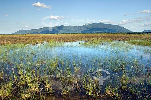 Assunto: Região do Lavrado de Roraima alagada - Serra Grande ao fundo  / Local:  Perto de Mucajaí - Roraima - Brasil  / Data: Janeiro de 2006