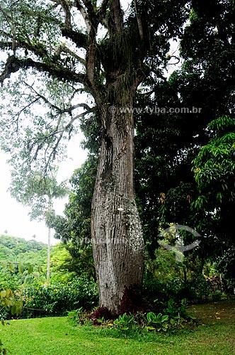 Asunto: Paineira , gênero Ceiba (antes, Chorisia) da família Malvaceae / Local: Barra do Piraí - Vale do Paraíba - Rio de Janeiro - RJ / Data: 11-2009