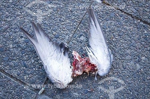 Assunto: Asas de pássaro morto sobre calçada  / Local:  Berlim - Alemanha  / Data: 11/01/2009