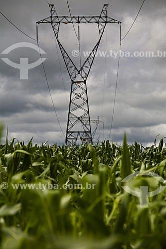 Assunto: Plantação de Milho com torre de transmissão de energia elétrica ao fundo na BR-163  / Local:  Mato Grosso (MT) - Brazil  / Data: Abril de 2009