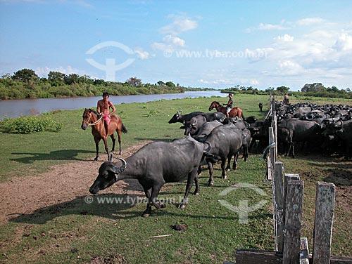 Assunto: Búfalos (Bubalus bubalis), na Fazenda da EMBRAPA - o Campo Experimental do Baixo Amazonas  / Local:  Cacoal Grande, na várzea do rio Amazonas, em Santarém, Pará, Brasil  / Data: 08/2003