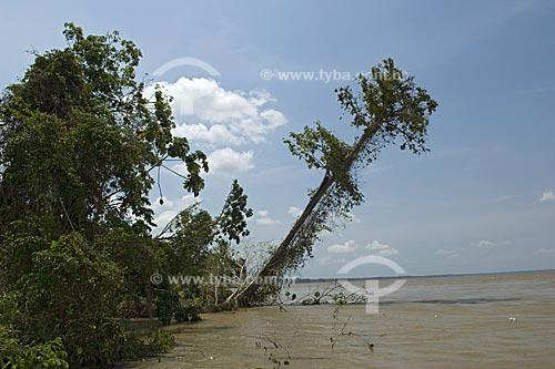 Assunto: Fenômeno da terra caída (erosão de barranco do rio) na margem direita do rio Amazonas  / Local:  Itacoatiara - Amazonas (AM) - Brasil  / Data: 11/2007