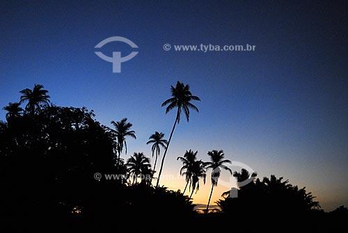 Assunto: Coqueiros de Baía Formosa  / Local:  Rio Grande do Norte (RN) - Brasil  / Data: 06/2009