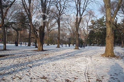 Assunto: Central park durante o inverno  / Local:  Nova Yorque - Estados Unidos da América  / Data: 10/2008