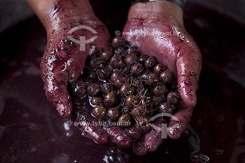 Assunto: Detalhe de mãos segurando caroço de açai depois de retirada a pulpa / Local: Abaetetuba - Pará - Brasil / Data: 01/11/2009
