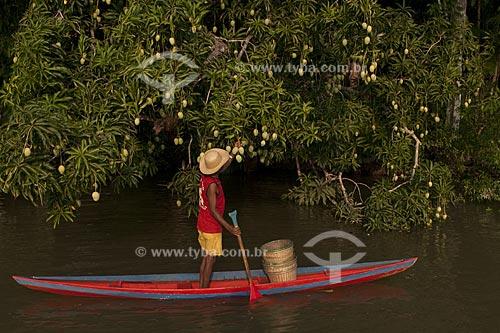 Assunto: Ribeirinho colhendo mangas na beira do rio / Local: Abaetetuba - Pará - Brasil / Data: 01/11/2009