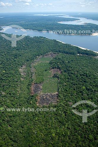 Assunto: Clareira desmatada na Floresta amazônica para fazer roças de agricultura de subsistência, ao sul de Nova Olinda do Norte  / Local:  Amazonas (AM) - Brasil  / Data: 11/2007
