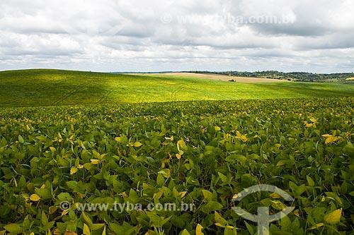 Assunto: Plantação de soja no Assentamento da Fronteira / Local: Dionísio Cerqueira - Santa Catarina - Brasil / Data: 02/2010