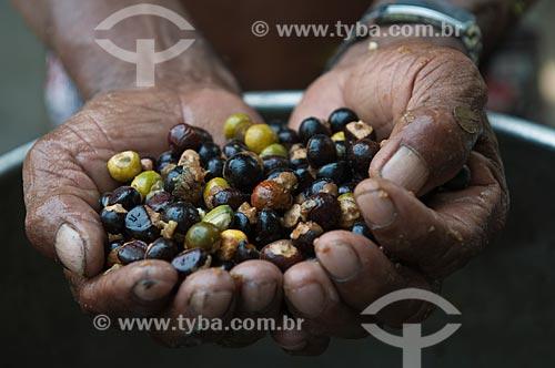 Assunto: Detalhe de mãos segurando sementes de guaraná / Local: Parintins - Amazonas (AM) - Brasil / Data: 15/10/2009