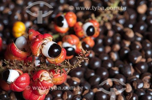 Assunto: Sementes de guaraná / Local: Parintins - Amazonas (AM) - Brasil / Data: 20/10/2009
