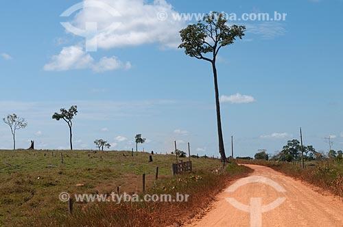 Assunto: Castanheiras preservadas despois do desmatamento / Local: Xapuri - Acre (AC) - Brasil / Data: 15/07/2009