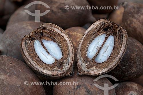 Assunto: Fruto de Babaçu / Local: Juverlânia - Tocantins (TO) - Brasil / Data: 20/11/2009