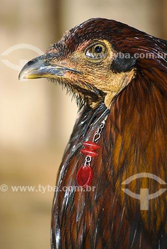 Assunto: Galináceo bissexuado: com características de galo e de galinha - mascote da Festa Farroupilha  / Local:  Ametista do Sul - RS - Brasil  / Data: Setembro de 2009
