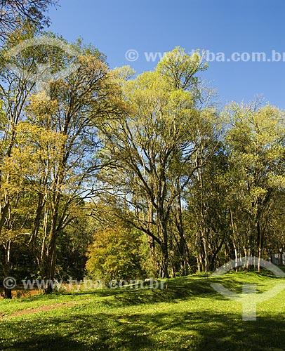 Assunto: Árvores ciliares à margem do Rio do Mel  / Local: Ametista do Sul - RS  / Data: Setembro de 2009