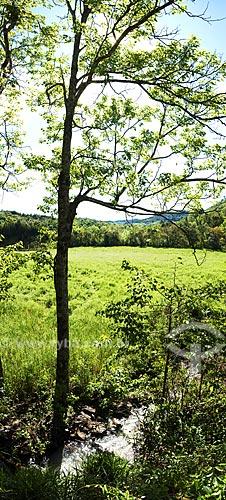 Assunto: Árvore em frente a campo de trigo  / Local:  Ametista do Sul - RS - Brasil  / Data: Setembro de 2009