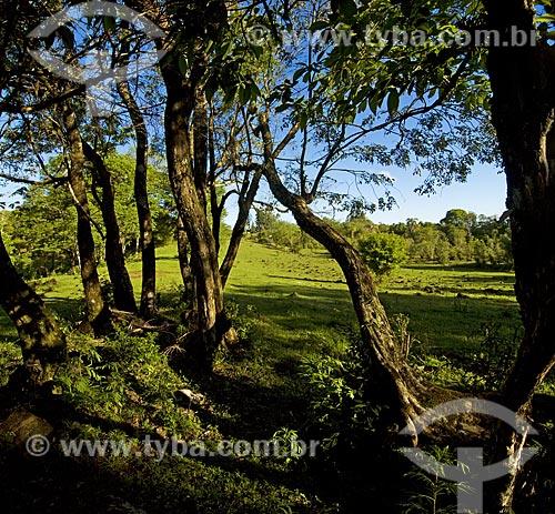 Assunto:  Paisagem com árvores e pasto  / Local:  Ametista do Sul - RS - Brasil  / Data: Setembro de 2009