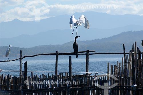Assunto: Garças na APA de Guapimirim, no fundo da Baía de Guanabara  / Local:  Guapimirim - Rio de Janeiro - RJ - Brasil  / Data: 05/2007